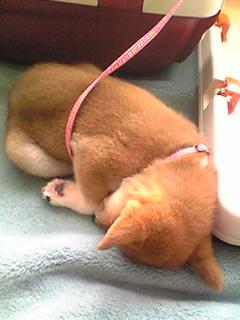 寝てるときが一番カワイイ