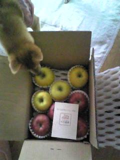 梨とリンゴが届きました。