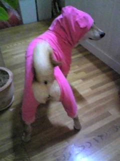くまさんパジャマ到着